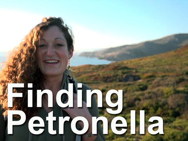 Finding Petronella